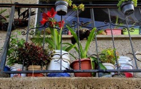 Flowers in pots on a balcony