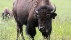 IVLP: Parks, Biodiversity, and Ecotourism Management