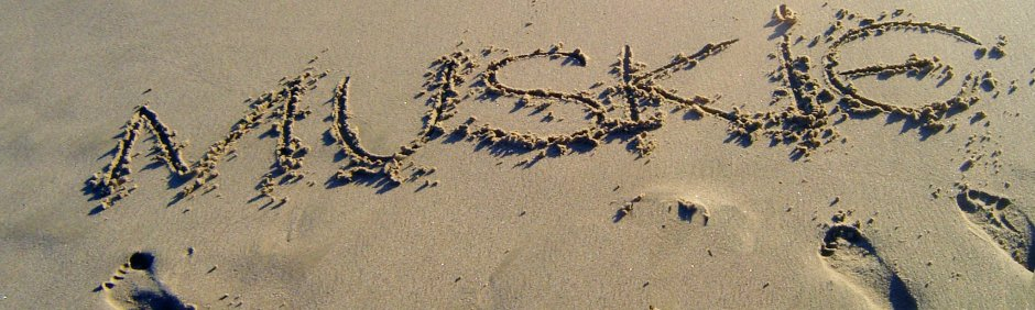 Photo of 'Muskie' written in the sand at the beach